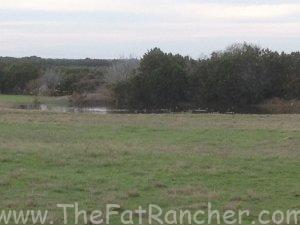 Photo of pasture.